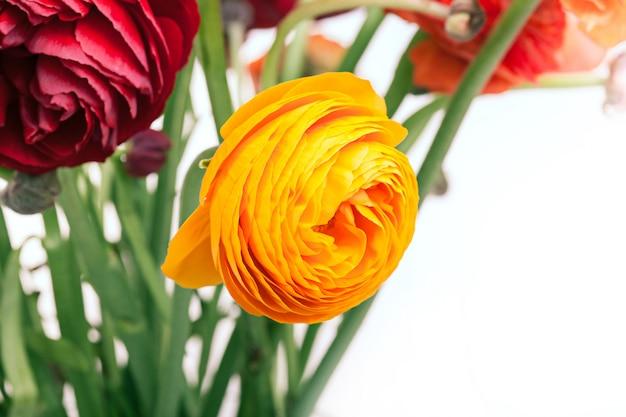 Bouquet De Fleurs Rouges Ranunkulyus Photo gratuit