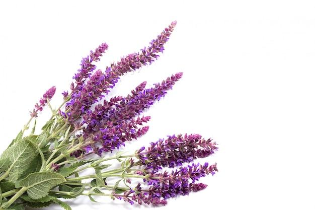 Bouquet de fleurs sauvages pourpres sur fond blanc, conception de plantes médicinales Photo Premium