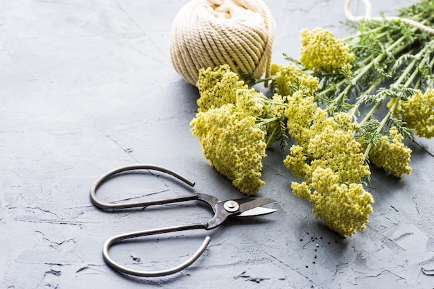 Bouquet d'helichrysum arenarium Photo Premium