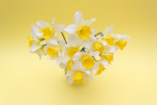 Bouquet de jonquilles jaunes sur jaune, printemps Photo Premium