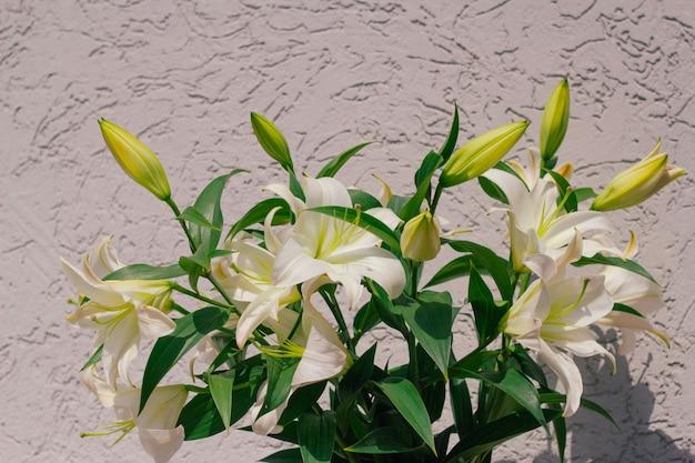 Bouquet de lis en fleurs devant un mur de béton gris minable Photo Premium