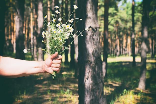 Bouquet de marguerites blanches dans la main d'un homme Photo Premium