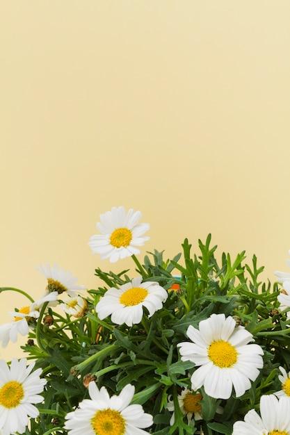 Bouquet de marguerites Photo gratuit