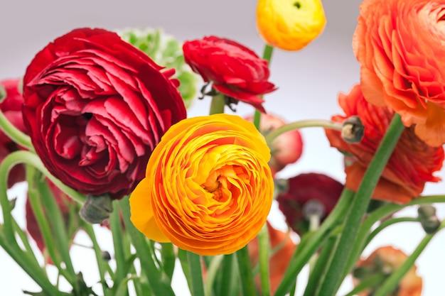 Bouquet De Ranunkulyus De Fleurs Rouges Sur Un Mur Blanc Photo gratuit