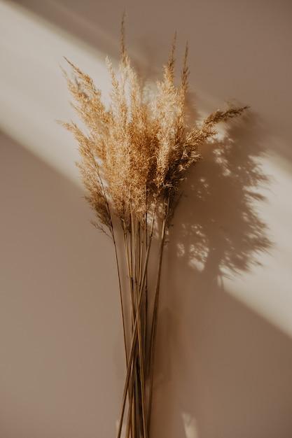 Bouquet De Roseaux Beige Sur Tableau Blanc. La Lumière Du Soleil Depuis La Fenêtre Photo Premium