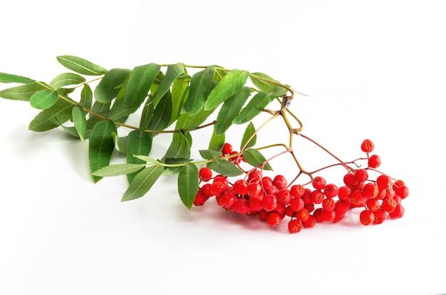 Bouquet de rowan rouge mûr avec des feuilles de rowan vert Photo Premium