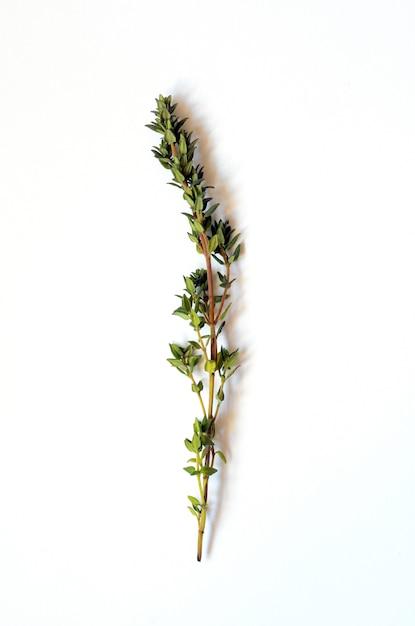 Bouquet de thym frais Photo Premium