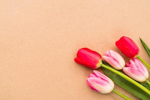 Bouquet de tulipes lumineuses sur des tiges vertes Photo gratuit