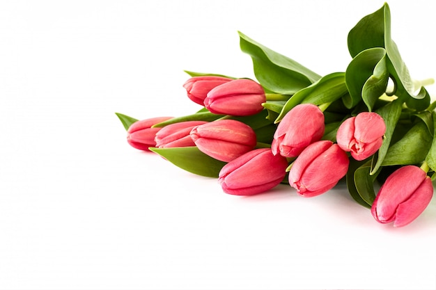 Bouquet de tulipes roses sur fond blanc. Photo Premium
