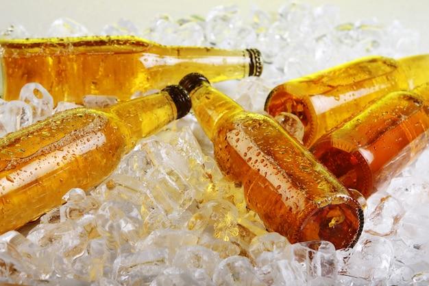 Bouteilles de bière se trouvant dans la glace Photo gratuit