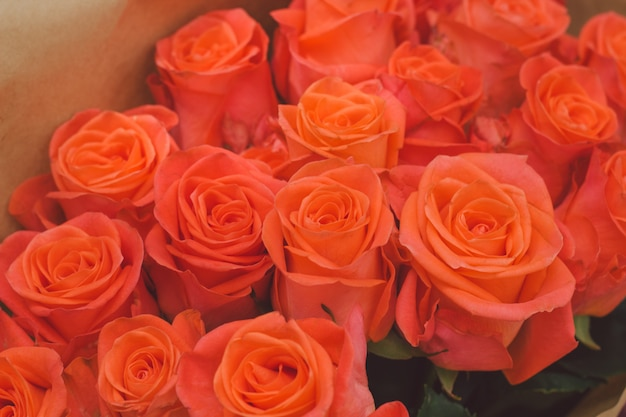Boutons de fleurs rose orange Photo Premium