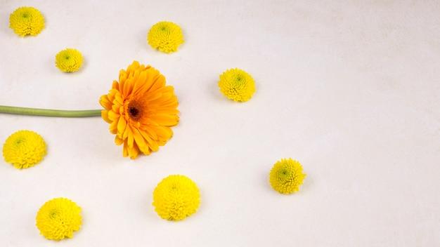 Boutons floraux jaunes frais et merveilleuse floraison sur tige verte Photo gratuit