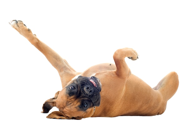 Boxer Dans Le Dos Photo Premium