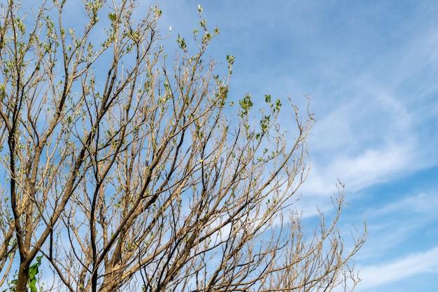 Branche D'arbre Et Feuilles Sèches Au Printemps Photo Premium