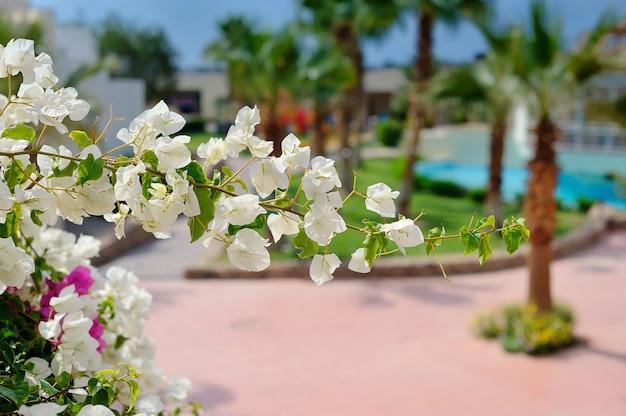 Branche D'arbre En Fleurs Blanches Photo Premium