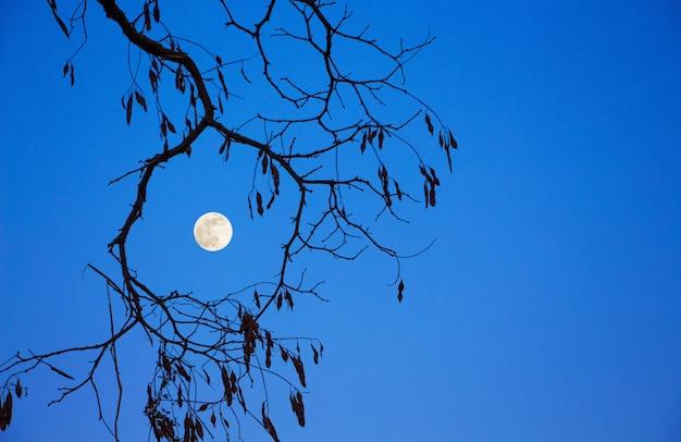 Branche D'arbre Et Lune Contre Le Ciel Bleu Photo Premium