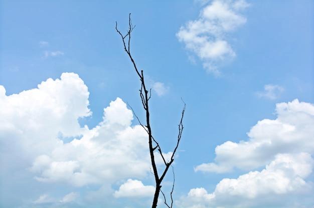 Branche d'arbre mort sur ciel bleu avec nuage en été Photo Premium