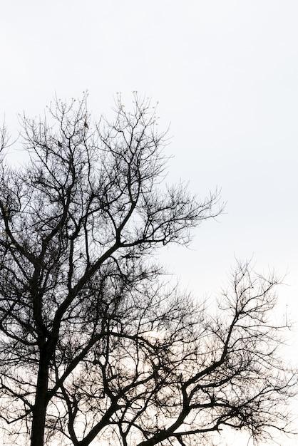 Branche d'arbre mort contre le ciel bleu (effet vintage transformé par image filtrée). Photo gratuit