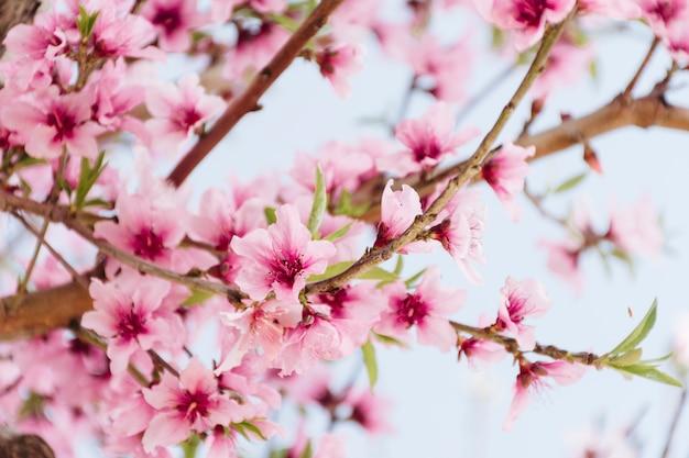 Branche avec de belles fleurs sur un arbre Photo gratuit