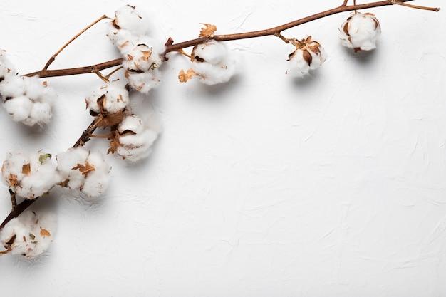 Branche de coton en fleurs sur la table Photo gratuit