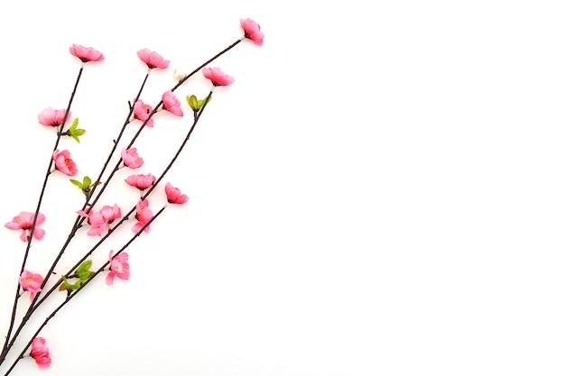 Branche fleurs de cerisier rose Photo Premium