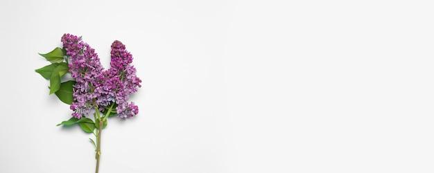 Branche fraîche de lilas rose sur fond rose. Photo Premium
