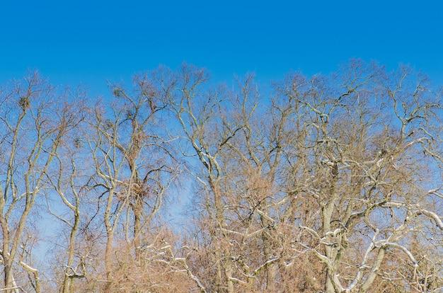Branche Pas De Feuille Dans Le Ciel Bleu Photo Premium