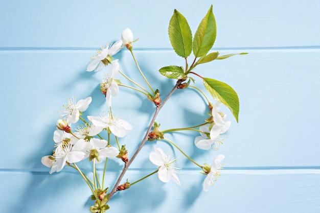 Branche de pomme avec des fleurs sur une table en bois bleue Photo Premium