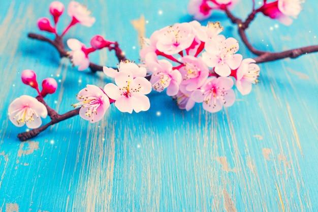 Branche de sakura en fleurs. Photo Premium