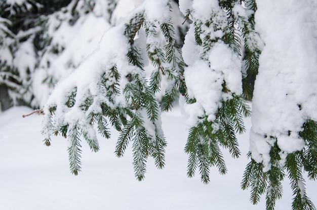 Branche de sapin enneigée Photo Premium