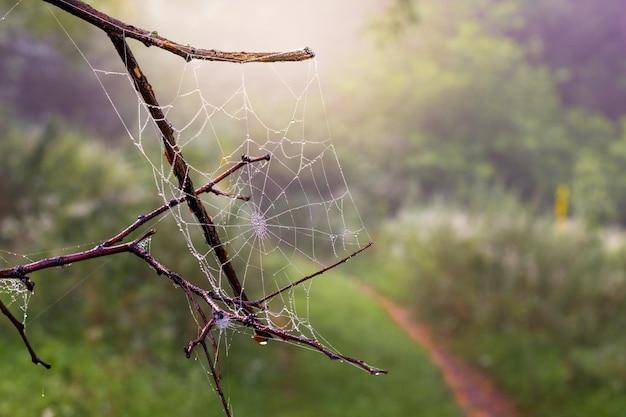Branche Sèche Avec Toile D'araignée Humide Dans Les Bois Le Matin Photo Premium