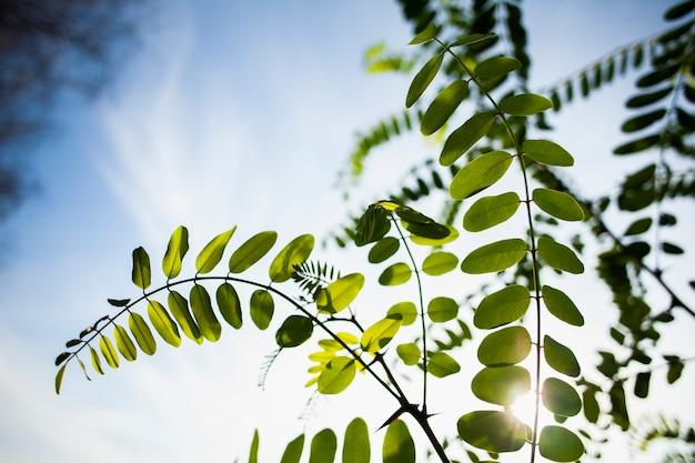 Branche verte sur une belle journée avec le soleil Photo gratuit