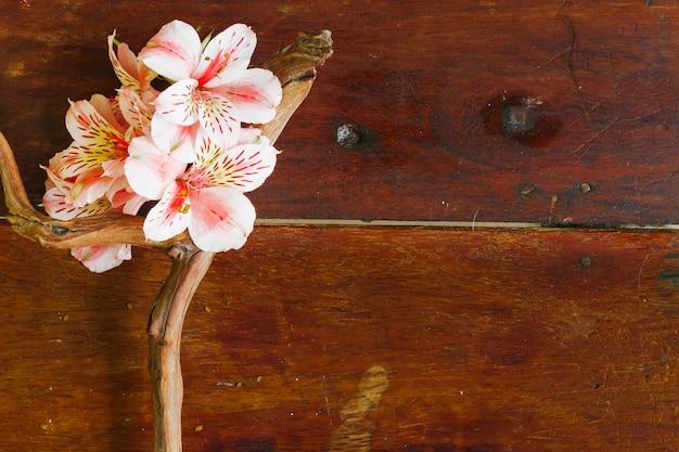 Branche Vue De Dessus Avec Des Fleurs Photo gratuit