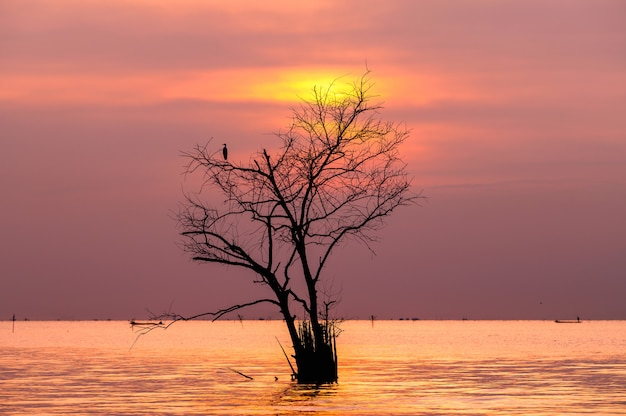 Branches d'arbre mort avec oiseau dans le lac avec le lever du soleil Photo Premium