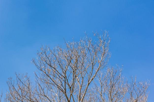 Branches d'arbres abstraites isolés sur fond de ciel Photo Premium