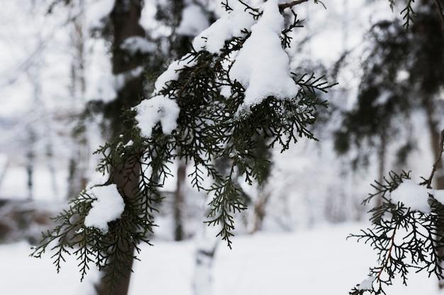 Branches D'arbres Givrés En Hiver Photo gratuit