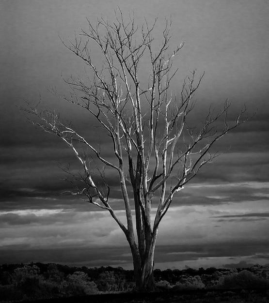 Branches d 39 arbres d 39 hiver les branches mortes d 39 automne d - Photo d automne gratuite ...
