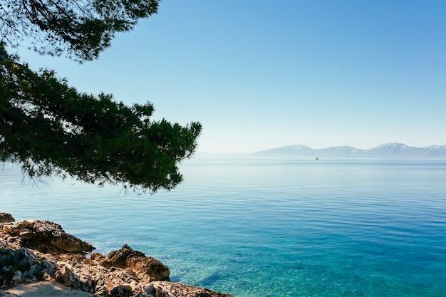 Branches d'arbres sur le lac bleu idyllique Photo gratuit