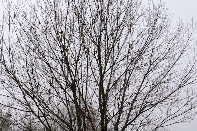 Branches D Arbres Sans Feuilles Photo Premium