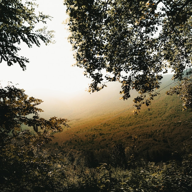 Branches D'arbres Et Vallée Brumeuse Photo gratuit