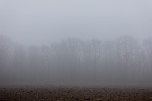 Branches De Chêne Dans Un Brouillard En Hiver Photo Premium