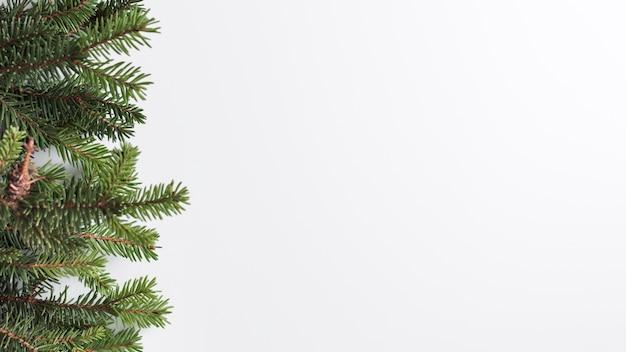 Branches de conifères sur un bureau lumineux Photo gratuit