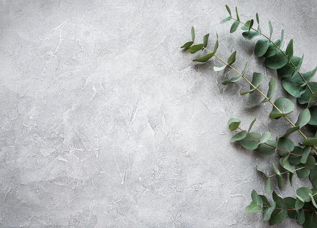 Branches d'eucalyptus sur un fond de béton Photo Premium