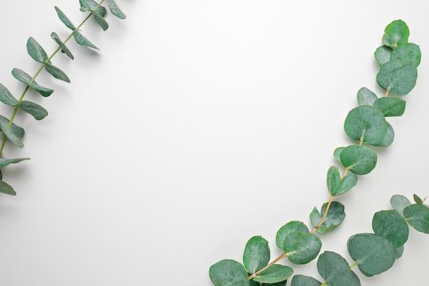 Branches d'eucalyptus sur fond blanc. plat, vue de dessus, espace de copie Photo Premium