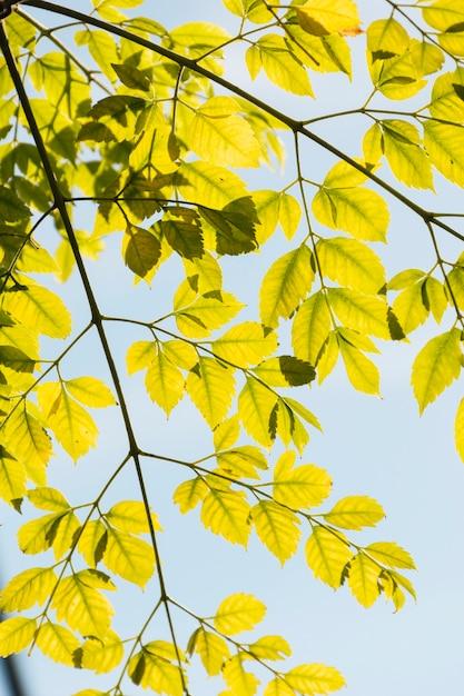 Branches avec des feuilles d'automne jaunes Photo gratuit