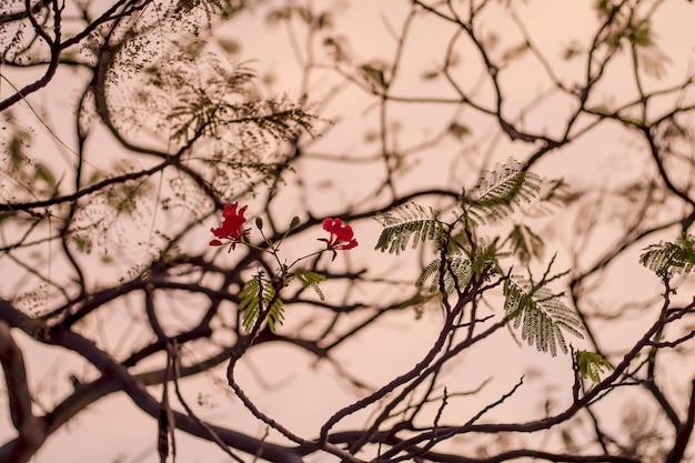 Branches de fleur rouge flou fond Photo Premium