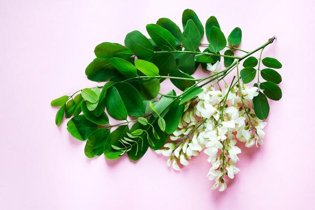 Branches en fleurs d'acacia blanc avec des feuilles vertes sur rose b Photo Premium