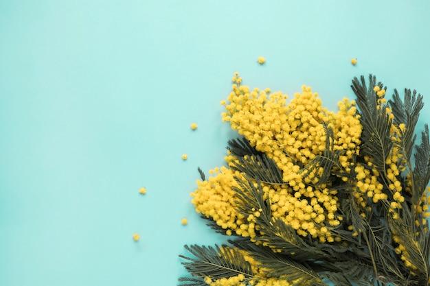 Branches de fleurs jaunes dispersées sur la table bleue Photo gratuit