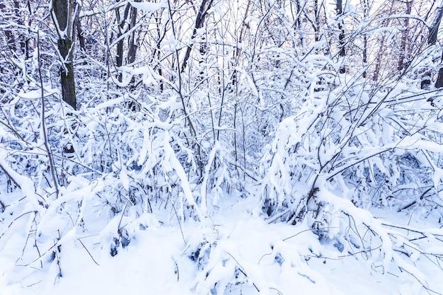 Branches d'hiver Photo Premium