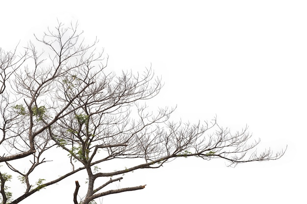 Branches Isolés Sur Fond Blanc. Tracé De Détourage. Photo Premium